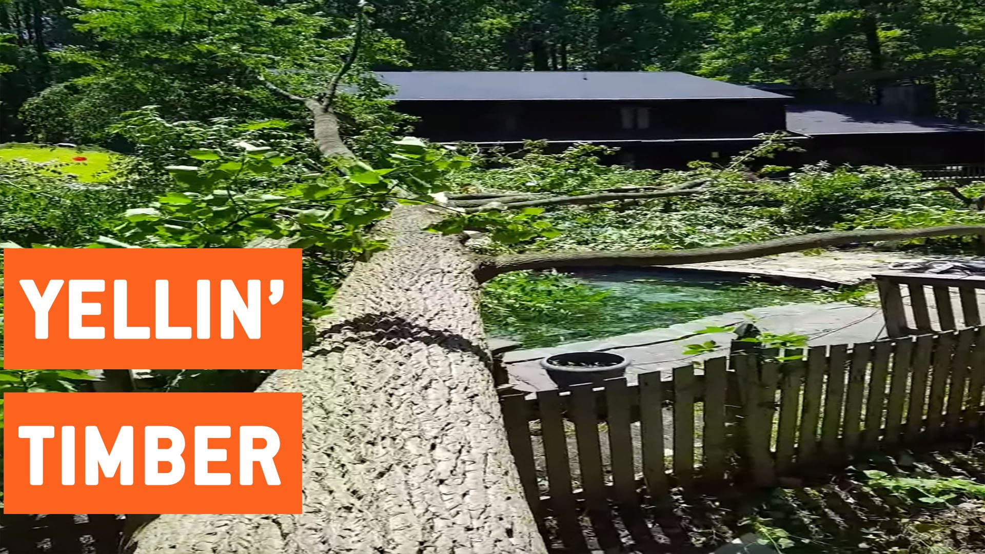 Huge Tree Falls Into Swimming Pool | TIMBERRRR